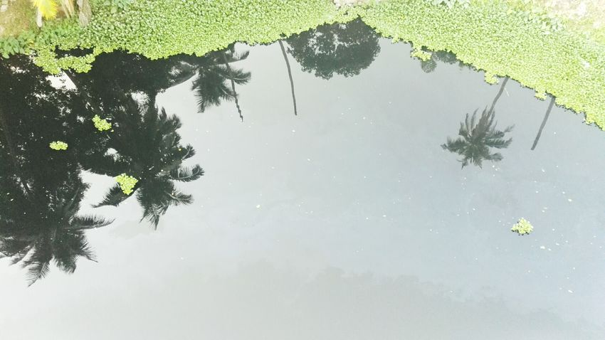 Reflection Water Reflections Nature Beauty In Nature Water Tree Mobilephotography Check This Out