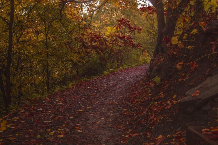 Walkway amidst trees in forest during autumn
