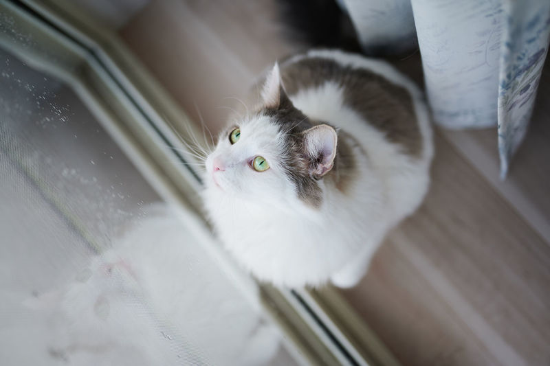 White cat looking out of glass window at home
