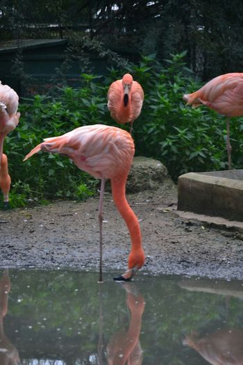 Birds Playing With The Animals Eyeemtunisia Tunisie
