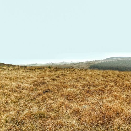 Another shot of Dartmoor Nature Scenics Sky Landscape Outdoors Beauty In Nature Field Agriculture Nature