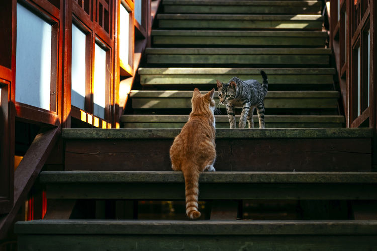 Low angle view of cat standing on staircase