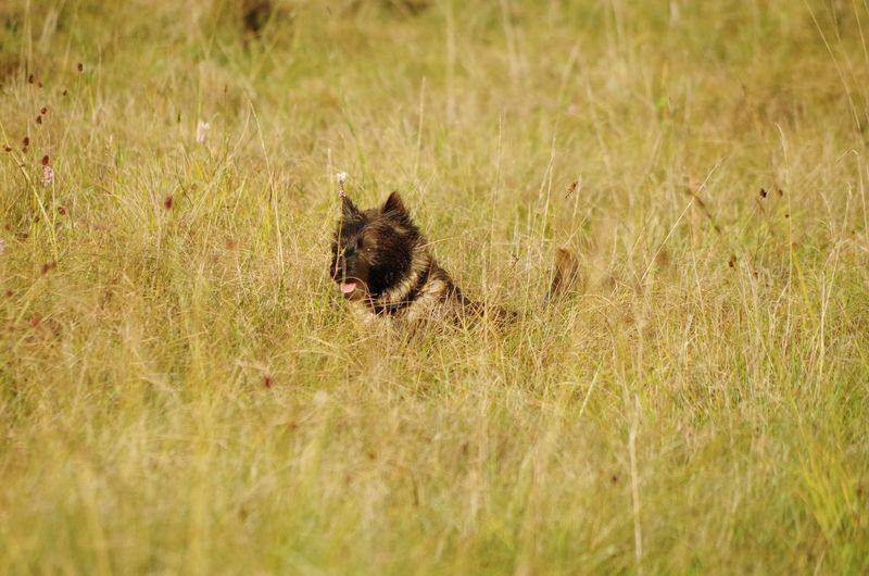 Cody Cairnterrier Morethanadog Meinjunge CodyModi Animal Wildlife Mammal Nature No People Outdoors