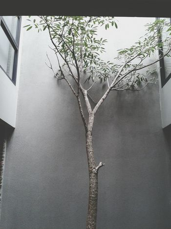 The Tree Of Life Concrete Wall Composition