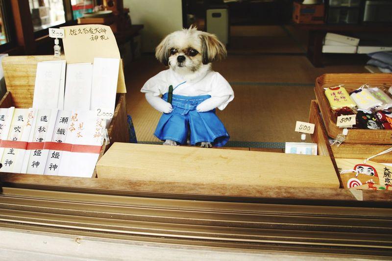 Animal Lovely Dog Temple Japanese  Japan 神社 日本 神主さん 神主 佐久奈度神社 祓戸大神 クリーニング Mammal Canine Pets Cute One Animal