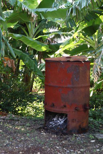 日本 Japan 南城市 Nanjyo-city ドラム缶 草むら くらむら Drum 南国 沖縄 Okinawa Natural 自然