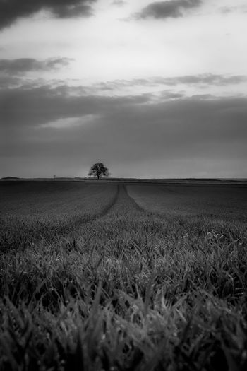 Silence BW Field Agriculture Rural Scene Growth Crop  Farm Cereal Plant Nature Outdoors Agricultural Machinery Beauty In Nature Cloud - Sky Landscape Day Tranquil Scene Tranquility Sky Scenics Poppy No People Monochrome Photography Outdoor Photography Black And White Travel Destinations