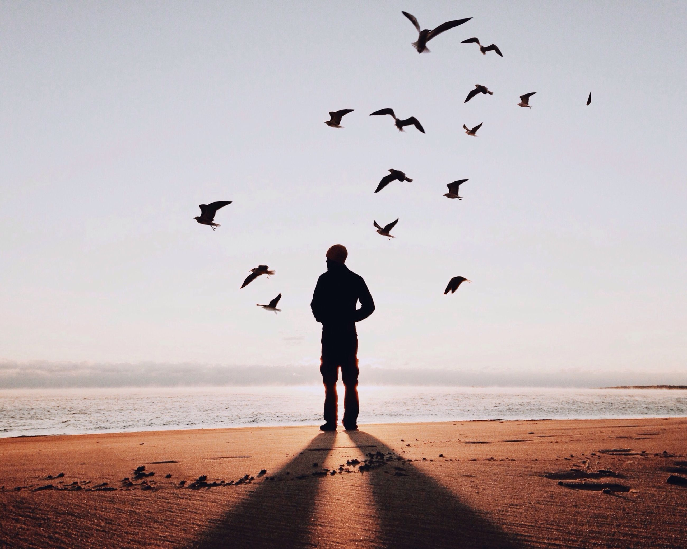 sea, beach, horizon over water, bird, water, shore, sand, animal themes, flying, silhouette, sky, full length, animals in the wild, scenics, tranquil scene, tranquility, nature, beauty in nature