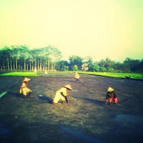 Hi! Taking Photos Relaxing Farmers at The Field Rice Planting Love It! <3