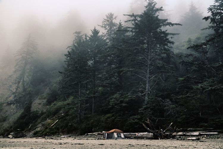 Olympic National Park Tree Forest Nature Fog No People Beauty In Nature Landscape Tranquility WoodLand Beach Vacation Time Adventure Tent Camping