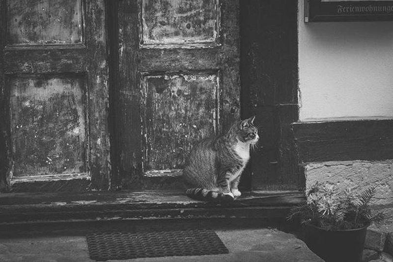 Wernigerode Wernigerodecastle Schloss Cat Instacat Instaanimal Bnw Bnw_life Bnw_society Bnw_captures Bnw_animals No_colours Door Canon 100D Kitlens Harz Istagram Shootanimals Blackandwhite TBT