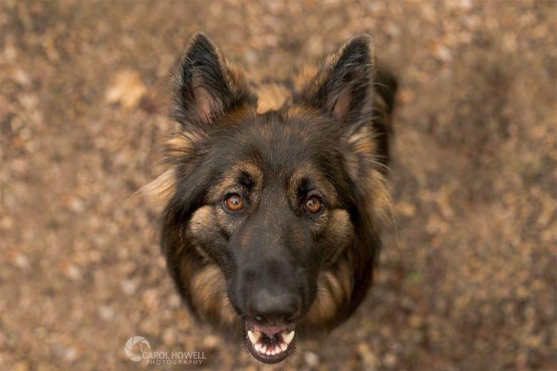Sasha Wolfe Does UK Uk Pets Corner Pet Photography  Dog I Love Dogs