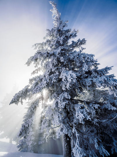 Low angle view of frozen tree against sky