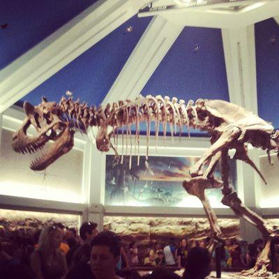 Dinoland Disneytrip DisneyWorld Animalkingdom
