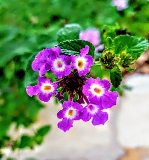 Flower Nature Growth Beauty In Nature Fragility Plant Petal Flower Head Close-up Outdoors Freshness Focus On Foreground