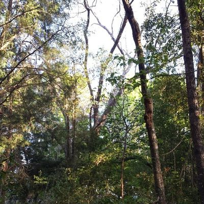 Gorgeous shot Trees Forest Nature Birdwatching nofilter s4