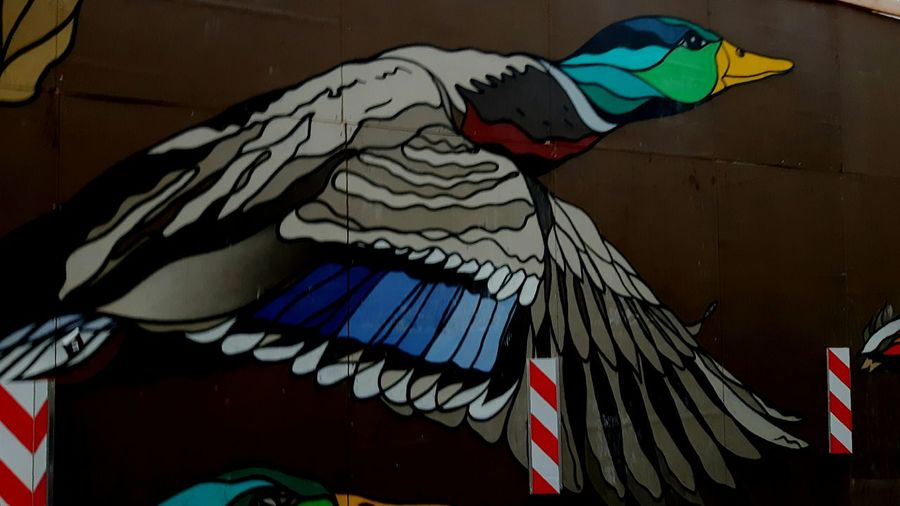 Duck!!!! Street Art/Graffiti