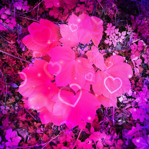 Envision The Future Pink Leaves Heart Hanging Out Taking Photos Check This Out Hello World Relaxing Enjoying Life Modern Art Today's Hot Look Magical Amazing Beautifulsexy pink