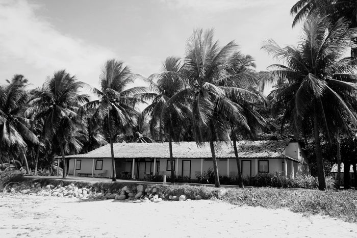In the middle of nowhere Tropical Blackandwhite Black And White The Traveler - 2015 EyeEm Awards The Architect - 2015 EyeEm Awards Open Edit OpenEdit In The Middle Of Nowhere In The Forest House
