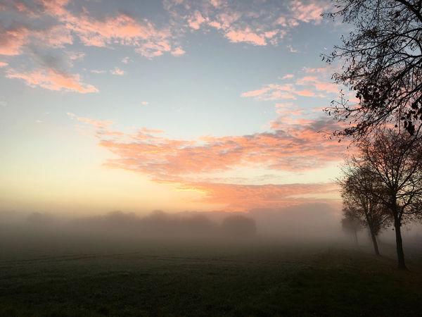 Foggy Morning Foggy Morning Fog