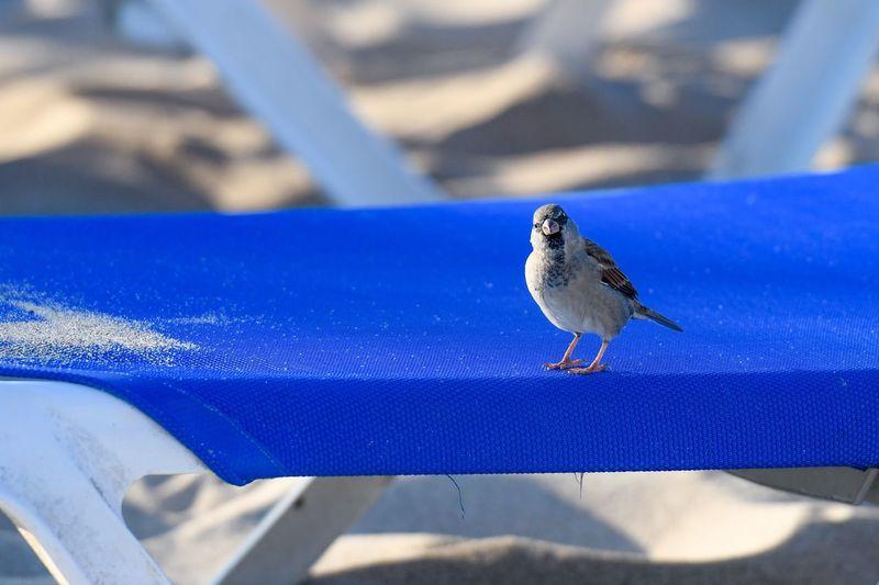 Sparrow on the beach Beach Sparrow Animal One Animal Animals In The Wild Animal Wildlife Animal Themes Blue Vertebrate Focus On Foreground Shadow Outdoors Bird Day Close-up