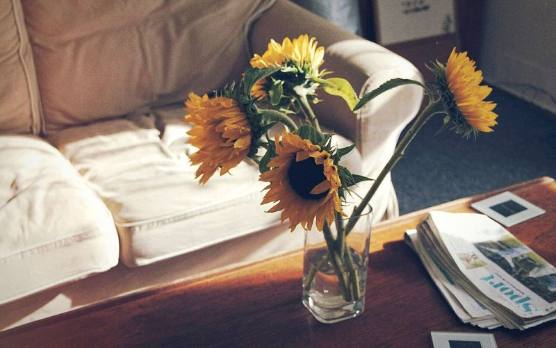 Sunflowers in vase indoors