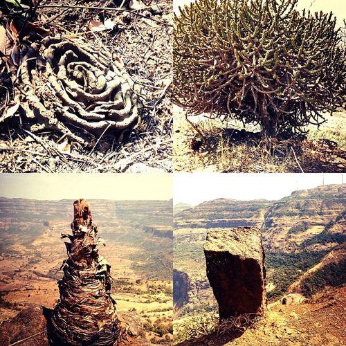 Natures beauty First Eyeem Photo