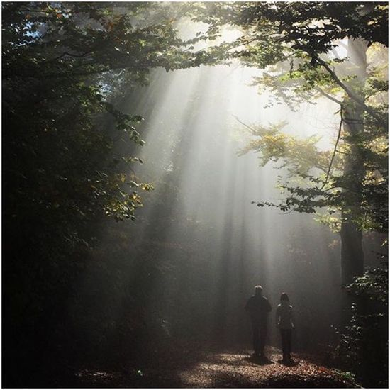Nature Tree Beauty In Nature Forest Tranquility Real People Tranquil Scene Fog Rayoflight Rayofsunshine Rayofhope Sun Light Trees Mountain EyeEmNewHere