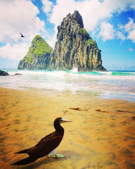 First Eyeem Photo Fernando De Noronha Island Praia Beach Bird Photography Bird Ocean Beautiful Nature