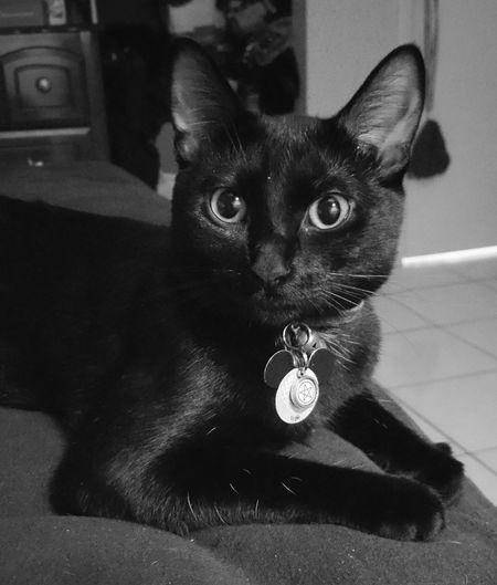 I love my Kitty. Freya is my gift. She saved my life.