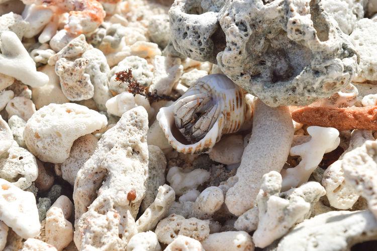 Full frame shot of pebbles and shells on beach