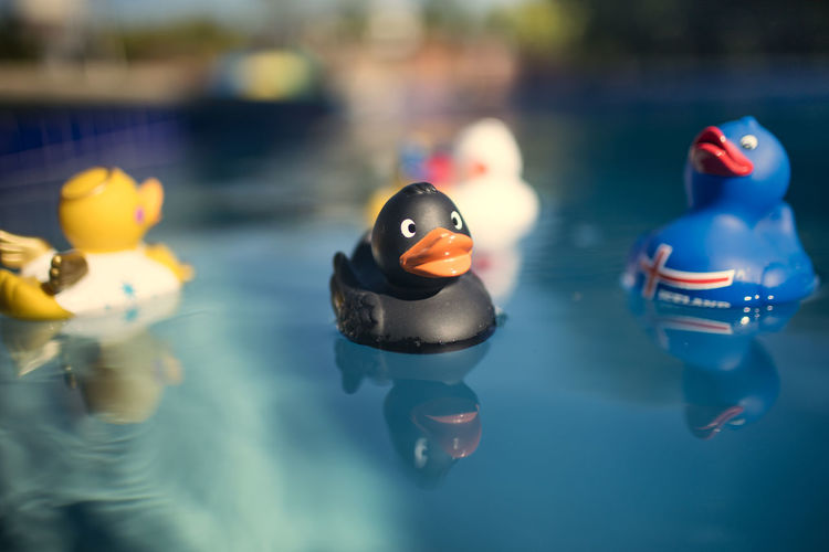 Close-up of duck swimming in pool