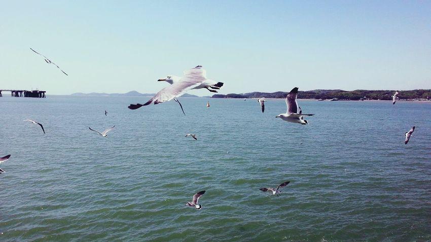 Korea Short Trip Smartphonephotography On The Ship Sea Seagulls Nice Weather