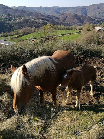 autour de cros EyeEm Selects Mountain Rural Scene Agriculture Field Horse Sky Livestock Landscape