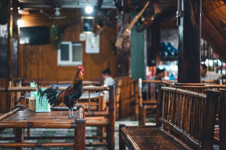 High angle view of bird on table in restaurant