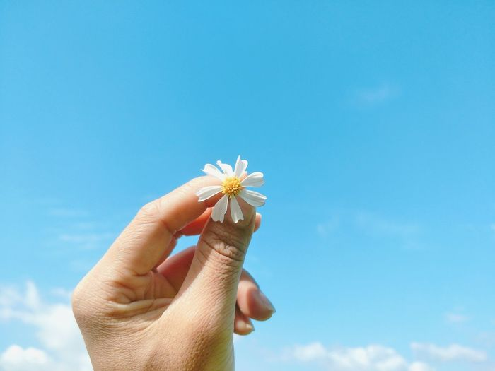 Close-up of hand holding white flower against sky