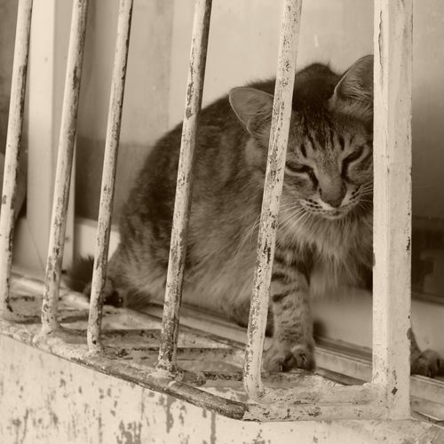 Cat Domestic Cat Feline Pets Mammal Domestic Animals Domestic One Animal No People Day Portrait Cage Relaxation Animals In Captivity Outdoors Metal
