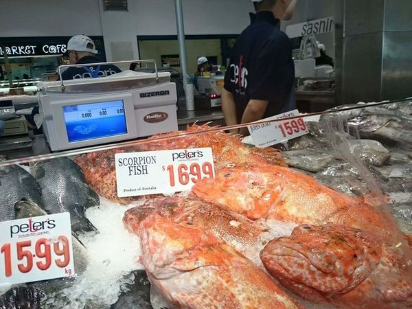Food And Drink Market Fish Fish Sydney Fish Market