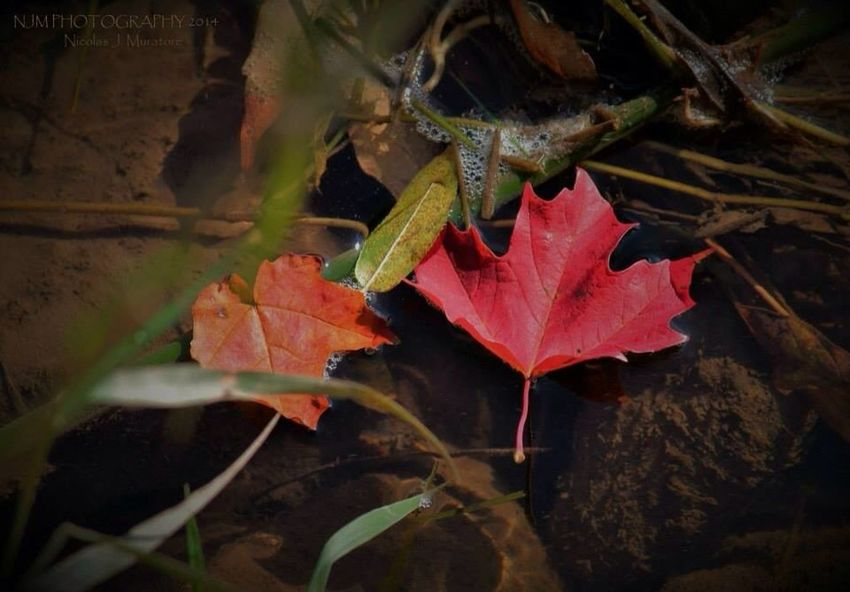Colours Fall Red Leaves My Photography wish i could take photos all day...