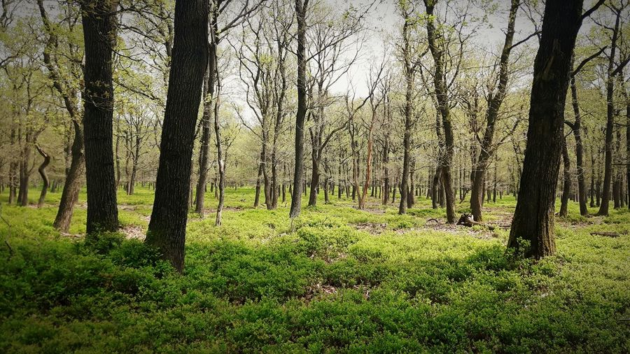 Tree Nature Forest Beauty In Nature Green Color Outdoors Veluwe