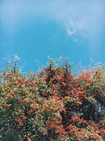 Growth Flower Nature Beauty In Nature Freshness Sky Tree Low Angle View No People Fragility Red Day Outdoors Plant Architecture Light And Shadow Vscocam Enjoying Life IPhoneography Daylight Capture The Moment Afternoon