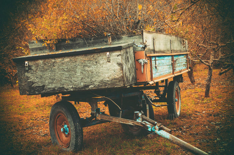 Full harvest trailer standing on the field in autumn Agriculture Autumn Industry Agriculture Autumn Beauty In Nature Cargo Day Field Forest Harvest Leaf Nature No People Outdoors Rural Scene Summer Trailer Tree