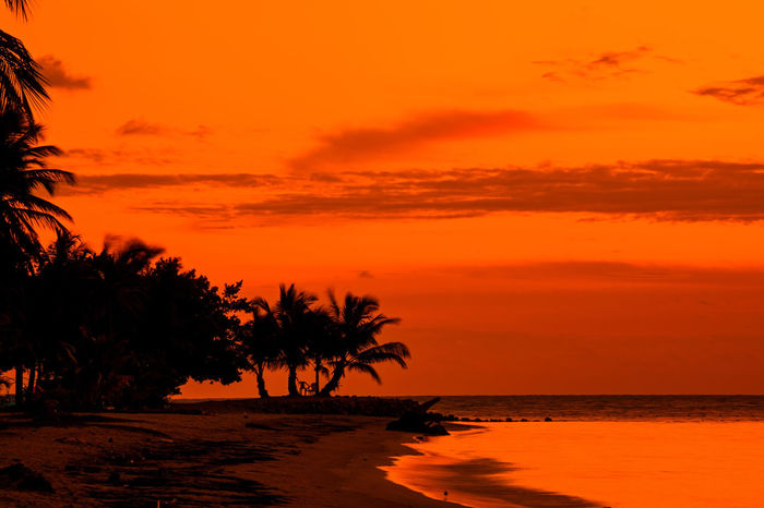 sunset at Cocoplum Beach, Colombia Coastline Romantic Beach Beauty In Nature Dusk Horizon Over Water Idyllic Intense Island Nature No People Ocean Orange Color Outdoors Palm Tree Scenics Sea Seascape Silhouette Sky Sunset Tranquil Scene Tranquility Tree Water