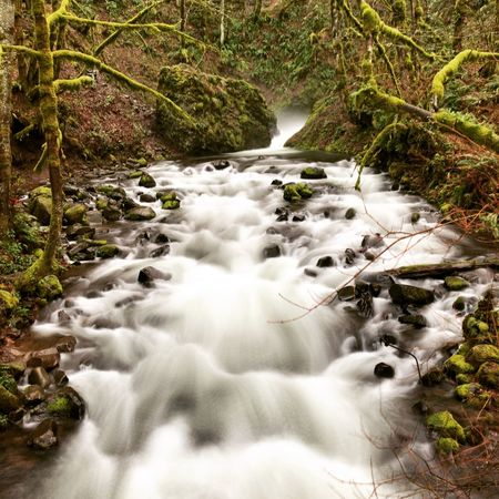 Waterfall in Oregon Waterfall Motion Flowing Water Water Nature Beauty In Nature Long Exposure