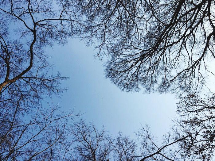 母校的天空,很怀念无忧无虑的学生时光。
