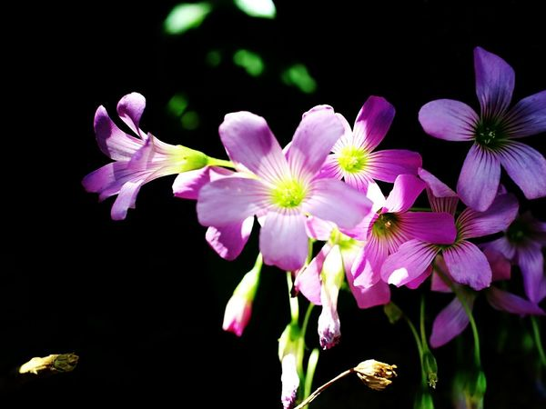 Flower Nature Purple Fragility Plant No People Beauty In Nature Outdoors Close-up Flower Head Orchid Day Freshness