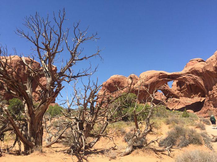 Bare tree in desert against clear blue sky