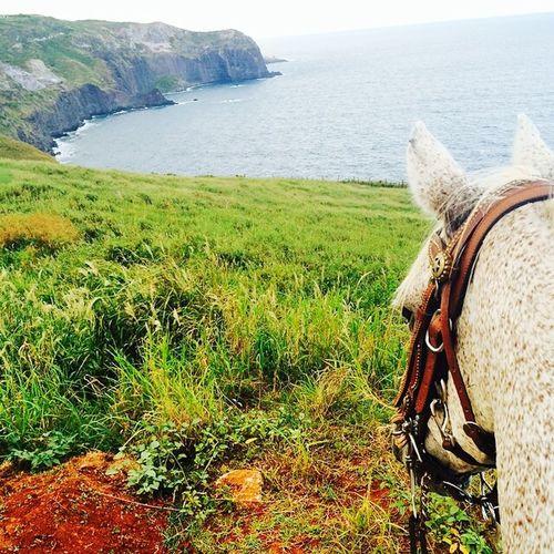 Horseback Horse Enjoying Life Maui Amazing