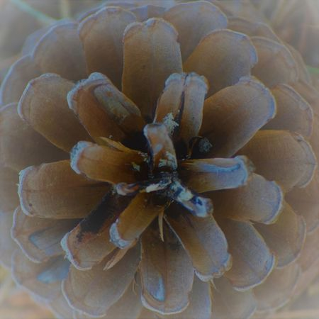 Beauty In Nature Focus On Foreground Nature No People Pine Cone Plant