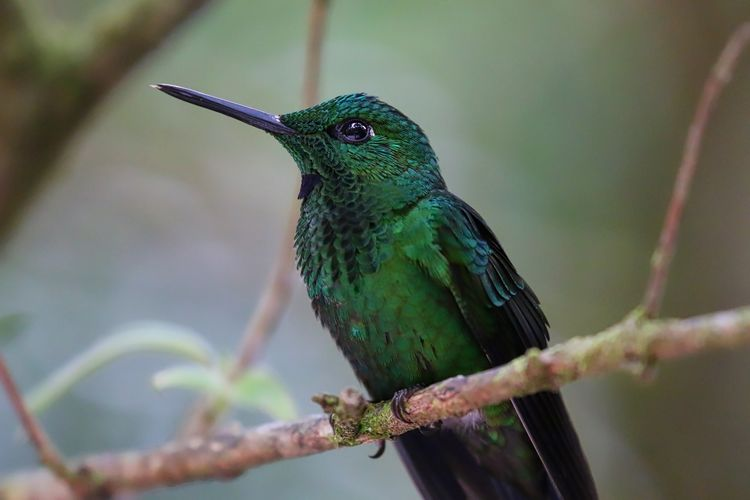 Low angle view of green-crowned brilliant hummingbird perching on tree
